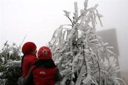 Giá lạnh đông đá trên cây ở vùng miền núi Sapa, Lào Cai hôm 13-2-2008. Photo AFP.