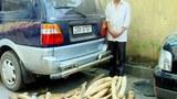 Số ngà voi này được chuyển từ Nghệ An lên Móng Cái tiêu thụ