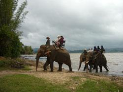 Du lịch trên lưng voi. Photo courtesy of dalateasyrider.com