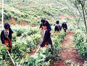 Dân tộc thiểu số ở thượng du Bắc Việt