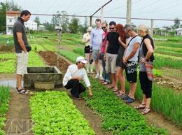 Du khách quốc tế đang nghe người dân giới thiệu về nghề trồng rau truyền thống ở Trà Quế. Courtesy Báo Ảnh Vietnam