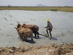 Người nông dân thôn Bà Râu. Hình do giáo xứ Bà Râu cung cấp.
