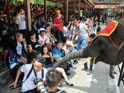 Du khách xem xiếc voi ở Thái Lan. (Ảnh minh họa chụp trước đây)