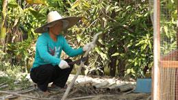 Anh Chua đang làm công việc thường ngày chặt cây dọn dẹp. RFA file