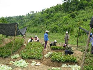 Vườn ươm cây Bạch Đàn giống của Công ty Innov Green. Photo courtesy of Innov Green.