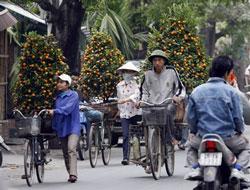 Cây tắc được chở đi bán vào dịp Tết nguyên đán. AFP Photo.