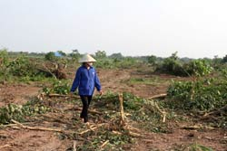 Một nông dân Văn Giang trên khu đất bị cưỡng chế hôm 24/4/2012. Photo courtesy of bee.net
