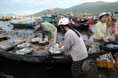 Cảnh mua bán hải sản tại một cảng cá ở Đà Nẵng trước khi có thảm họa Formosa.