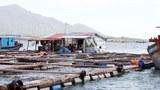 Cam Ranh: Bè cá của chủ nhân Trung Quốc đã tồn tại trên vịnh Cam Ranh trên 10 năm