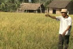 Người nông dân ĐBSCL bên cánh đồng lúa trĩu hạt của Anh. RFA PHOTO.