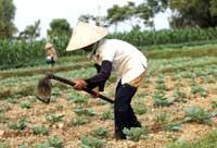 FarmerWto200.jpg