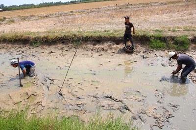 Một cánh đồng thiếu nước ở huyện Long Phú, tỉnh Sóc Trăng hôm 2/3/2016. AFP PHOTO.