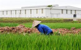 Đất tròng trọt được ưu tiên cho khu đô thị, nhà máy, cao ốc...AFP