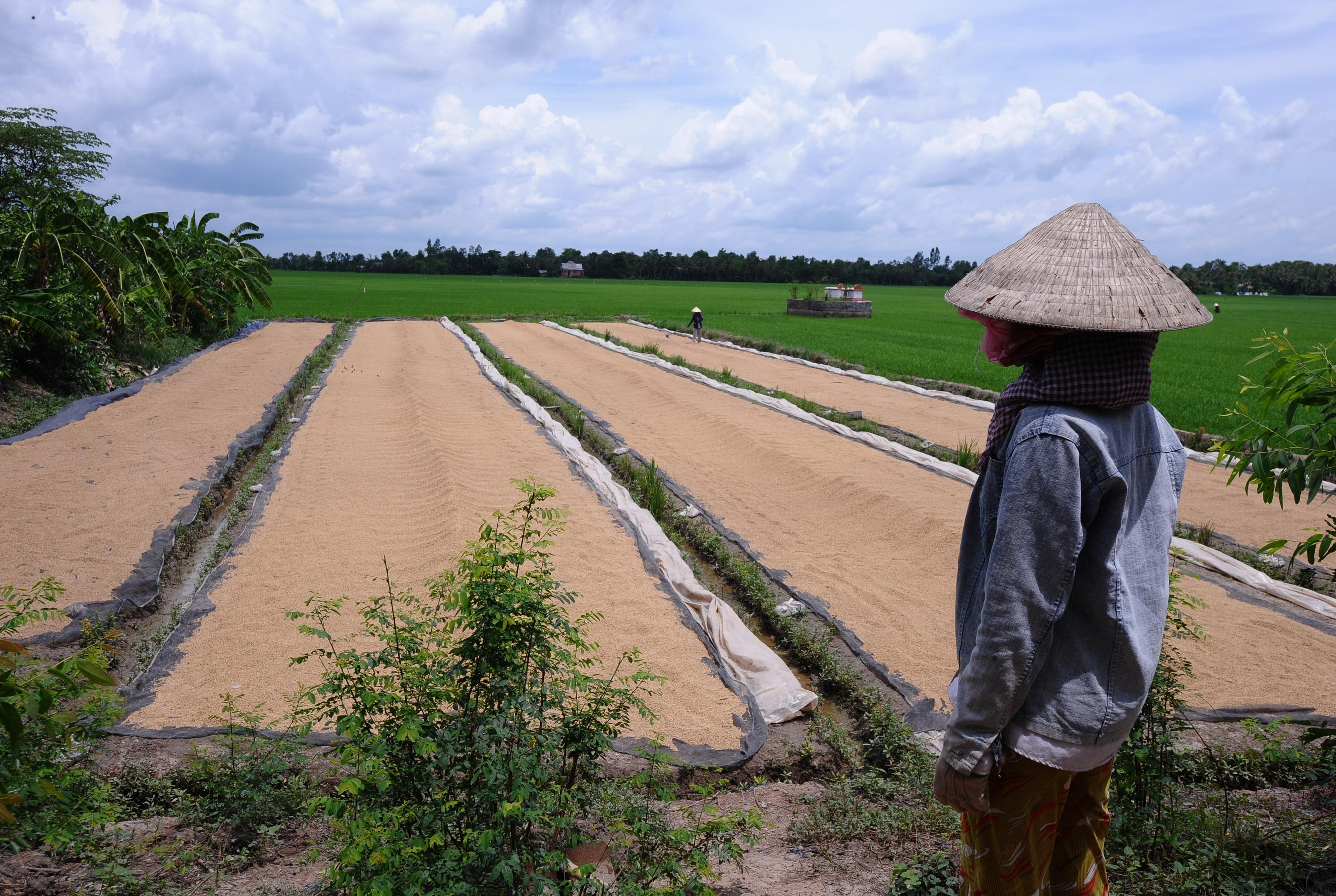 Nông dân phơi lúa trên một cánh đồng ở huyện Phú Nhuận, tỉnh Tiền Giang, ảnh chụp trước đây.