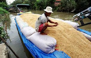 Lúa gạo được di chuyển trên sông Tiền Giang. AFP