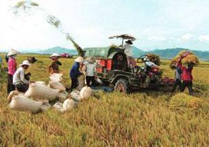 Đưa máy móc vào sản xuất, thực hiện cơ giới hóa nông nghiệp. Source vfej.vn