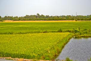 Ruộng lúa diện tích nhỏ thấy nhiều ở miền Nam. Photo RFA