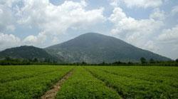 Đất nông thôn Tây Ninh