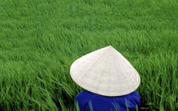 Nông dân và cánh đồng lúa. AFP