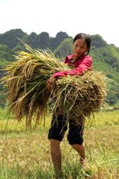 Người nông dân Việt Nam gánh chịu đủ mọi thiệt thòi