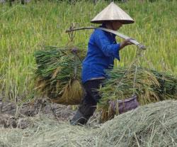 Một nông dân vùng ven Hà Nội. RFA photo