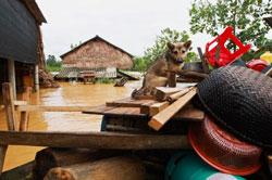 Người dân dọn đồ chạy lũ ở Hương Khê, Hà Tĩnh hôm 17/10/2013. AFP PHOTO.