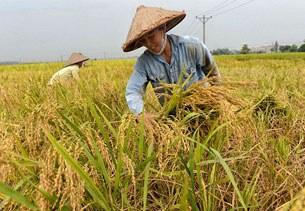 Nông dân mùa gặt