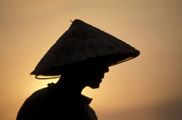 Ai là người chịu thiệt thòi nhiều hơn người nông dân. AFP