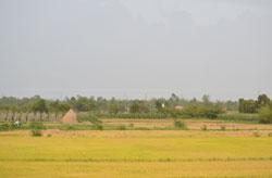 Một cánh đồng tại ĐBSCL, ành chụp trước đây. RFA PHOTO.