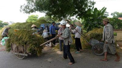 Nông dân Việt Nam với mùa thu hoạch ở ngoại ô Hà Nội hôm 9/6/2016.