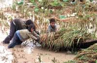 RiceChildren200.jpg
