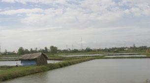 Những mảnh ruộng vùng Đồng bằng sông Cửu Long