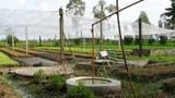 Khí sinh học được truyền ống từ hầm chứa vào nhà để nấu bếp tại nhà một nông dân ở Huế.