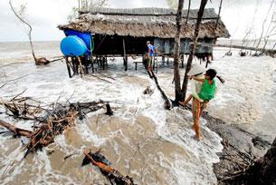 Vùng Khai Long, tỉnh Cà Mau trong khu vực hệ sinh thái rừng ngập mặn đang bị sóng biển tàn phá từng ngày