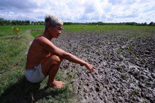 Ông Dang Roi bên thửa ruộng bị nước mặn tràn vào hôm 05.07.2010 tại tỉnh Bến Tre.