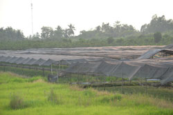 Người dân ĐBSCL che phủ cây trồng để hạn chế nắng nóng, ảnh chụp hôm 06-04-2011. RFA PHOTO.