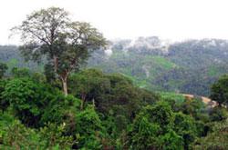 Vùng lõi Vườn quốc gia Cát Tiên mai này sẽ biến mất nếu xây dựng thủy điện Đồng Nai 6 và 6A. Photo courtesy of Báo Đồng Nai .