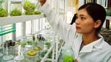 Một phòng thí nghiệm giống cây trồng biến đổi gien