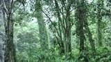 Một khu rừng nguyên thủy