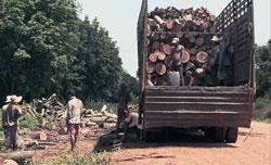 Tập đoàn Công nghiệp Cao su VN vận chuyển gỗ ở Campuchia. Courtesy Global Witness.