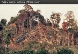 Tập đoàn HAGL  bị  Global Witness tố cáo phá rừng để trồng cao su ở Lào. (Global Witness)