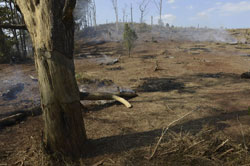 Cây rừng bị đốn bỏ ở Dak Lak hôm 12/03/2013. AFP PHOTO.