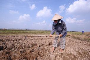 Đất dành cho nông nghiệp lúc nào cũng thiếu. AFP