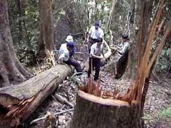 Khai thác gỗ, phá rừng ở huyện miền núi Sơn Hà, tỉnh Quảng Ngãi hồi năm 2008. Photo courtesy of vfej.vn