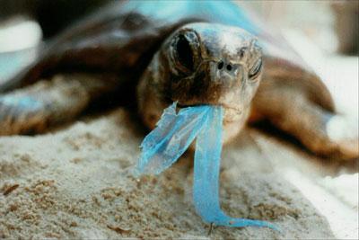 Một con rùa đại dương với mảnh bao plastic trong miệng. Photo courtesy of onegreenplanet.org