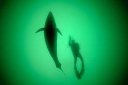 Our Ocean- Đại dương của chúng ta (photo NatGeo)