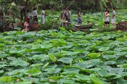 Một góc du lịch sinh thái trong khu vực hồ sen ở Quảng Bá, Hà Nội. RFA photo