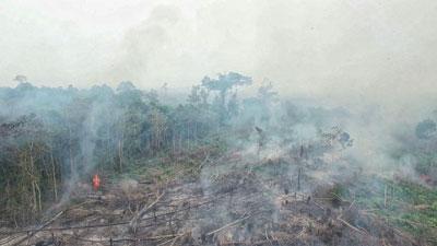 Quang cảnh cảnh rừng ở Indonesia ngày 8 tháng 10, 2015. AFP