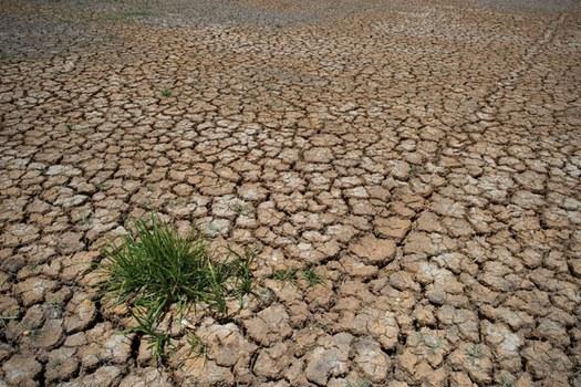 Một cánh đồng khô hạn vùng Đồng bằng sông Cửu Long