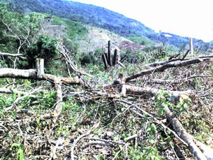 Rừng đầu nguồn Vĩnh Kim, Bình Định bị tàn phá. Courtesy Báo Bình Định